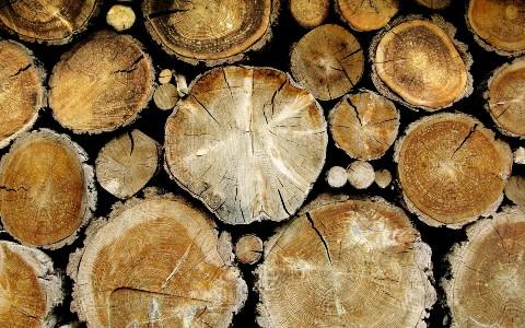 Archive_Miscellaneous_Logs_029641_ Идеи для бизнеса: использование отходов деревообработки для производства конечного продукта