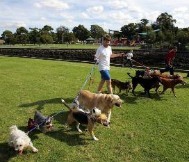 r139386_477585 Бизнес идеи: как организовать услуги по выгулу собак