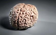 15606257ef11a944647128b334c4fb90-220x137 IQ vs EQ или какие мозги нужны для успеха?
